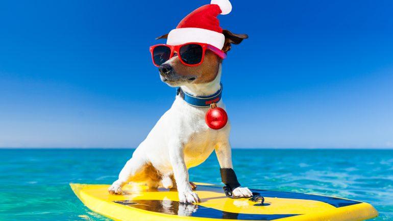 surfender Hund mit Weihnachtsmütze auf SUrfbrett