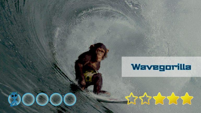 bewertung und test des wavegorilla surfboard shops