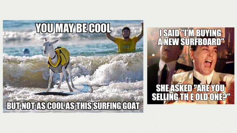 surfboard meme surfende ziege