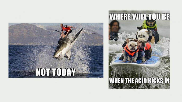 ente und lama surfen surfer memes